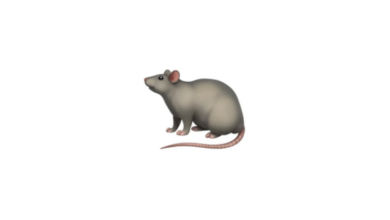 Photo of WhatsApp: What does the rat emoji mean?