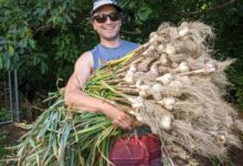 Photo of People share their huge harvest results