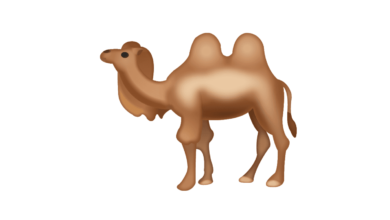 Photo of WhatsApp: What does the camel emoji mean?