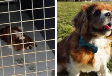 Photo of Animals that were on the brink of despair until a true human came into their lives