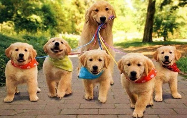 dog-and-puppies