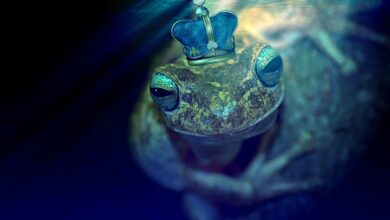 Photo of What does it mean to dream of frogs?